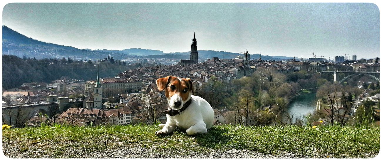 City View  of Bern Jack Russell I Love Ny Dog.❤