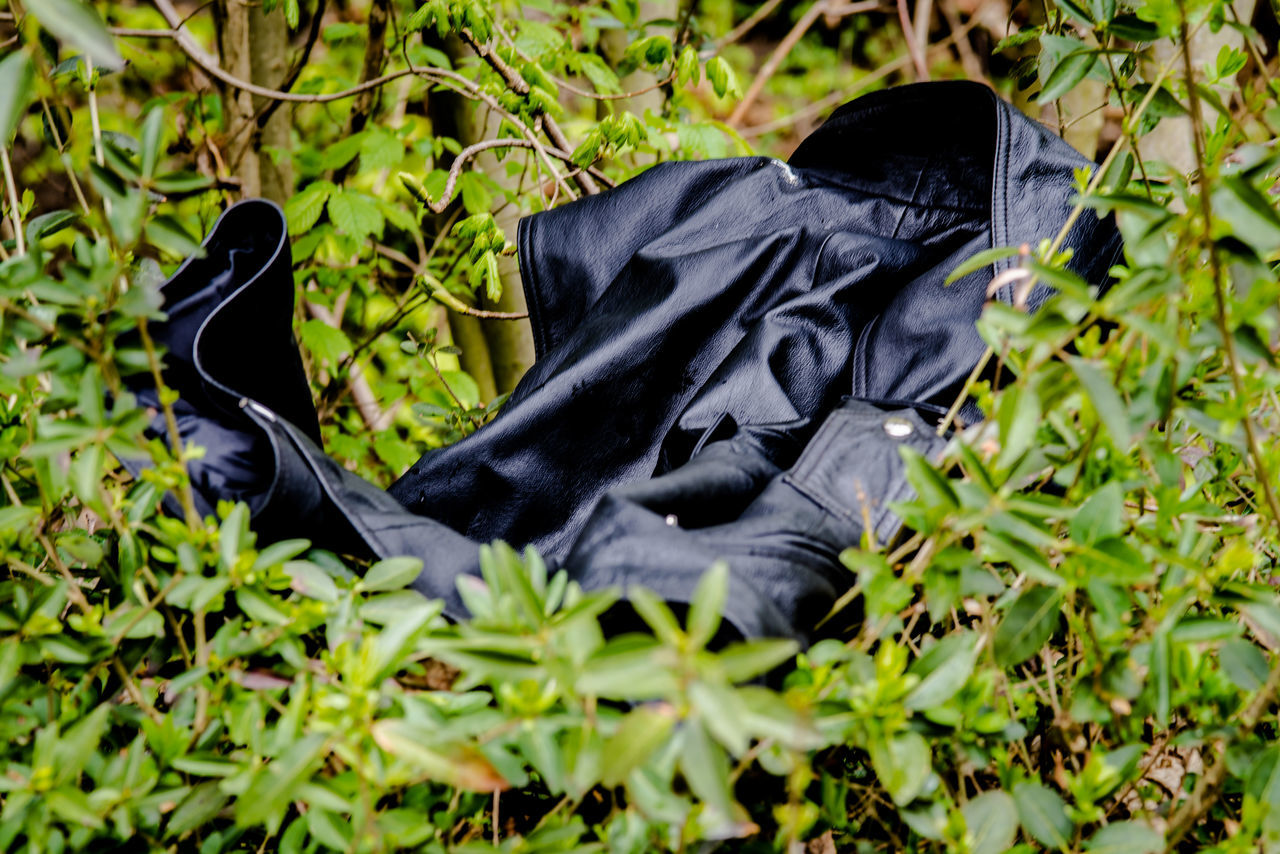 Black Color Day Jacket In Nature Leather Jacket Mammal Nature No People Outdoors Plant Raven - Bird Strange Things Strange Things In Nature