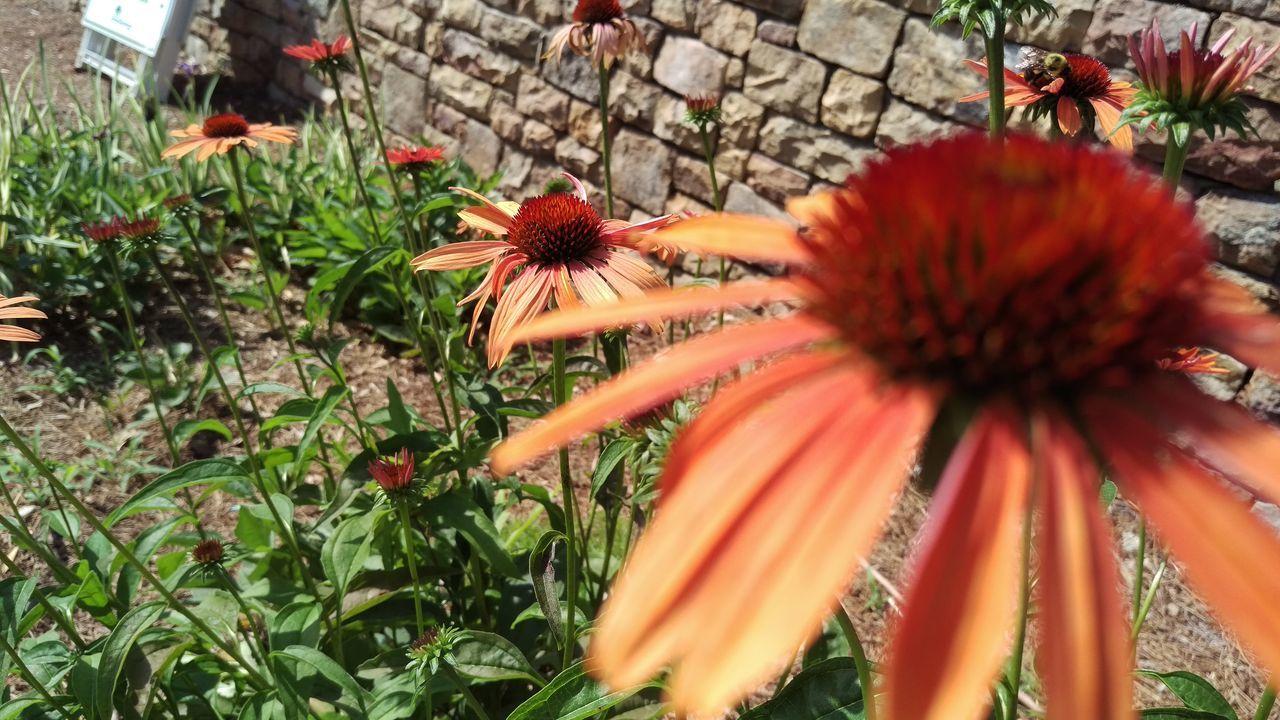 Nature Loveletters Flower Summer