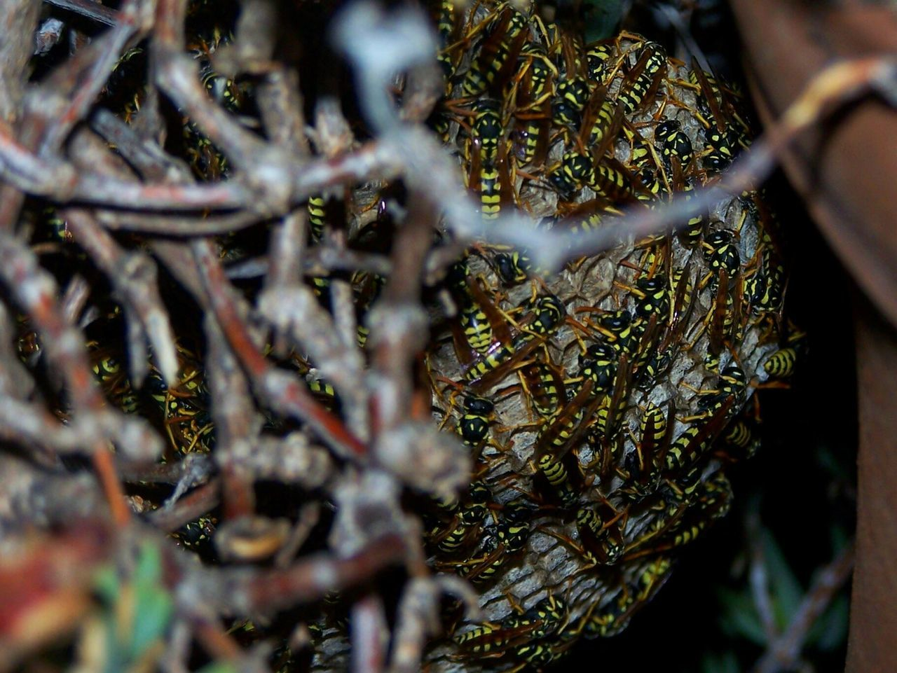 Wasps Nest Wasps Animal Themes