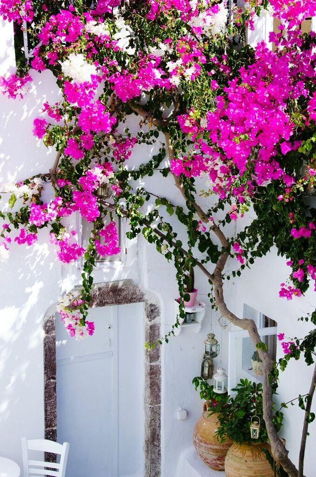 Ensevilesicicek Beyaz Yaz Yazgeldi Yaşasın Pembe çiçek Hi!