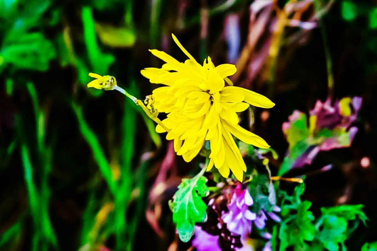 flower, yellow, fragility, petal, nature, growth, freshness, beauty in nature, flower head, plant, outdoors, close-up, no people, day, blooming, animal themes