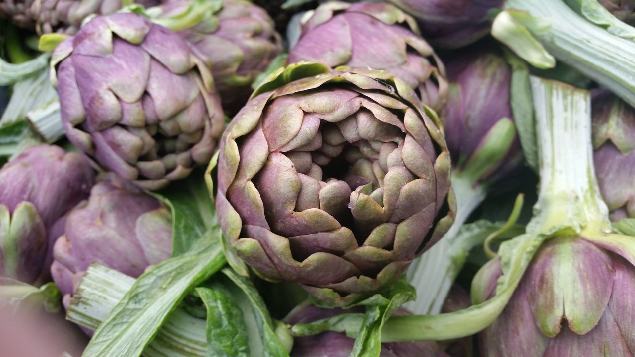 Artichokes Carciofo Di Cupello Detail Mazza Ferrata Nature Plant