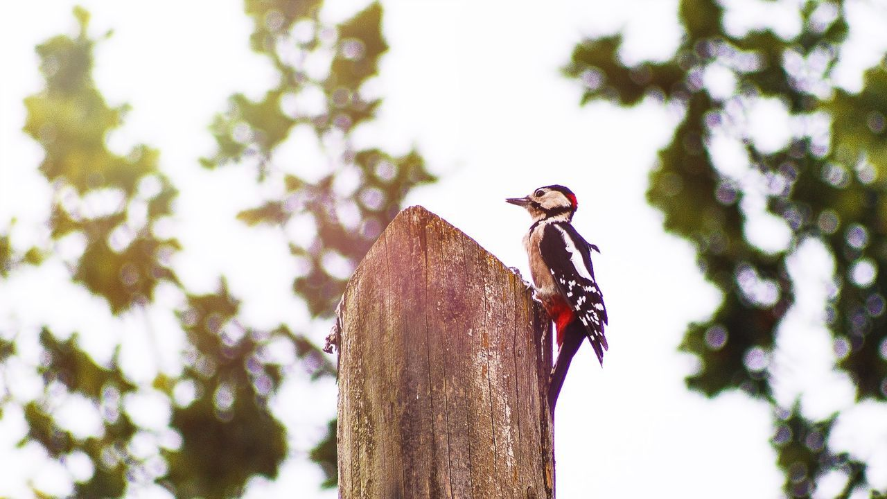 Beautiful stock photos of woodpecker, Multicolored, animal Themes, animals In The Wild, beak