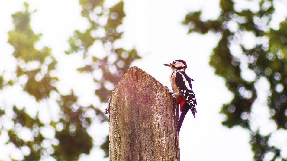 Beautiful stock photos of woodpecker, Multicolored, animal Themes, animals In The Wild, beak