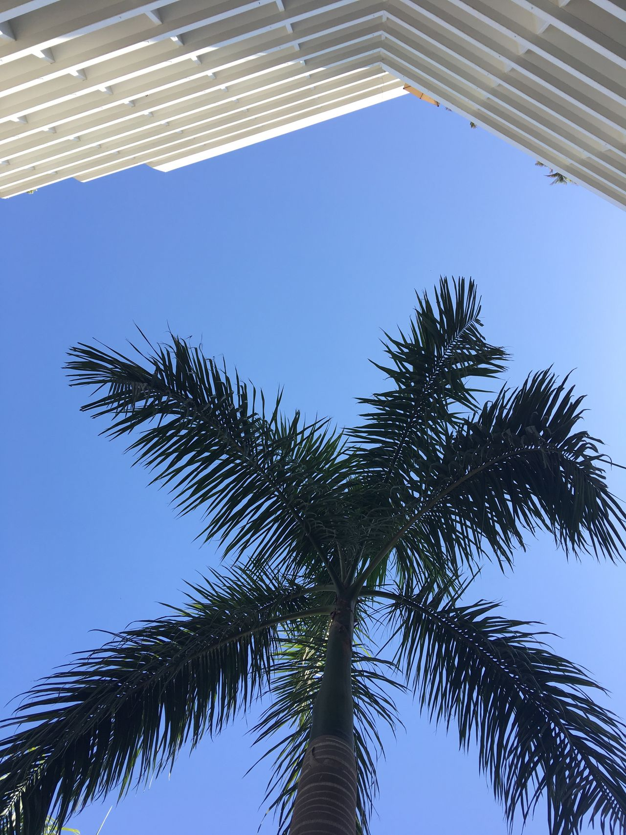 Low Angle View Tree Palm Tree Blue Day Clear Sky Outdoors Growth No People Sky Nature Close-up Vacations Vacation Blue Sky Minimalism Architecture Textured  Summer Green Color Shape Lines Textured