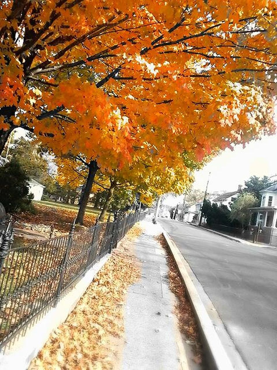 Autumn Colors very beautiful and awesome