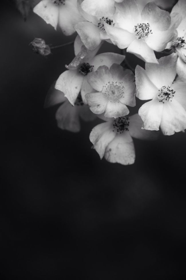 Softy bnw Bnw Flowers