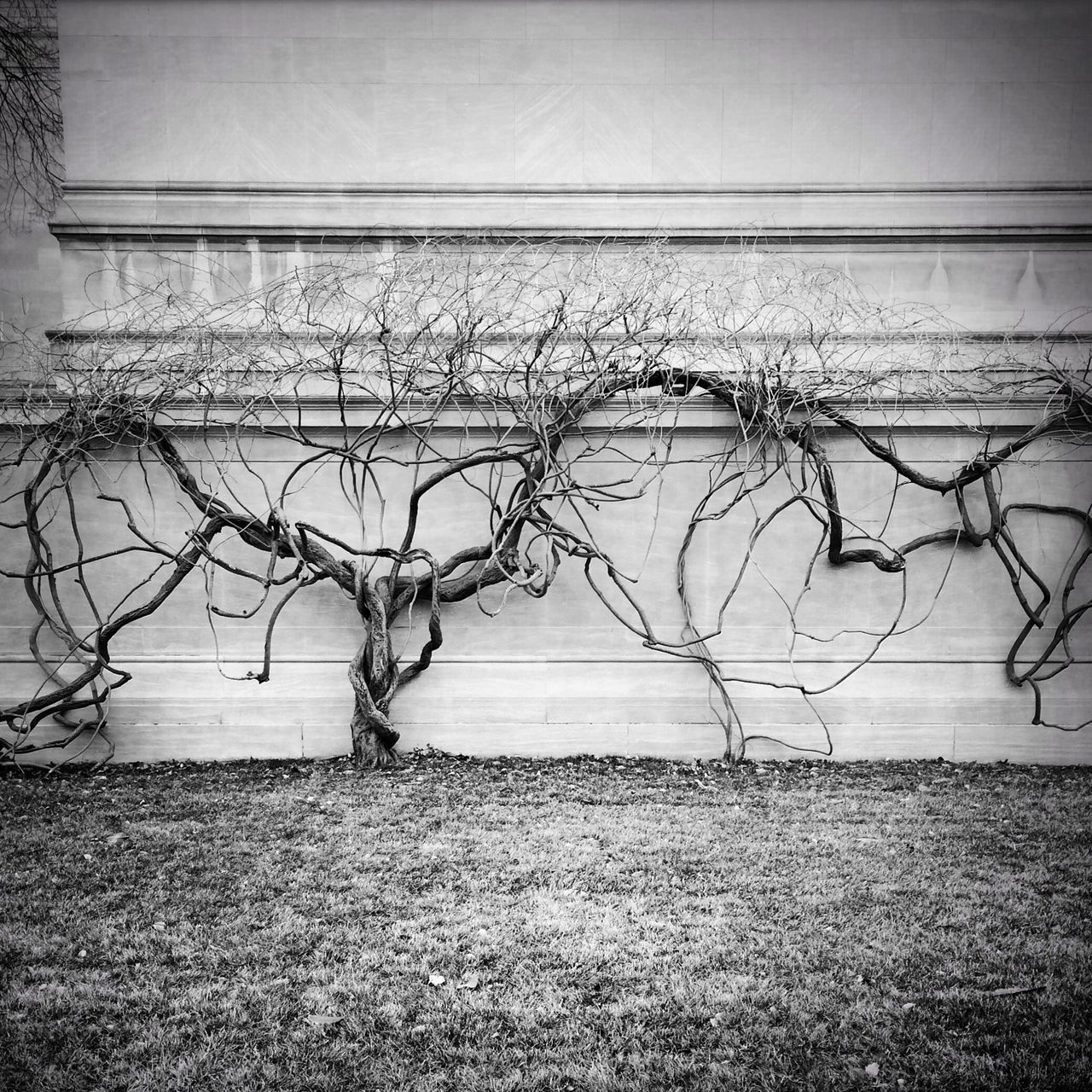 A nice Wall at the National Gallery Of Art in Washington, D. C. . Black And White Eye4photography  EyeEm Best Shots - Black + White Architecture IPhoneography