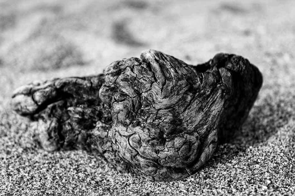 Close-up Black And White Macro Macro Blackandwhite Macro Foreground Focus Blackandwhite Photography Black And White Photography EyeEm EyeEm Best Shots Black & White Black And White Beach Beach Photography Driftwood Drift Wood  Beach Black And White Sand Drift Wood On Beach Driftwood Macro Close Up Textured  Outdoors Wood Texture Wood Textures Black And White Collection