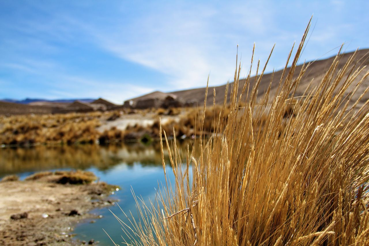 Highland Pond Andes Mountains Beauty In Nature Blurred Background Close-up Day Grass Growth Landscape Mini Mountain Nature No People Outdoors Plant Pond Scenics Selective Focus Sky Sky And Clouds Tranquil Scene Tranquility Water