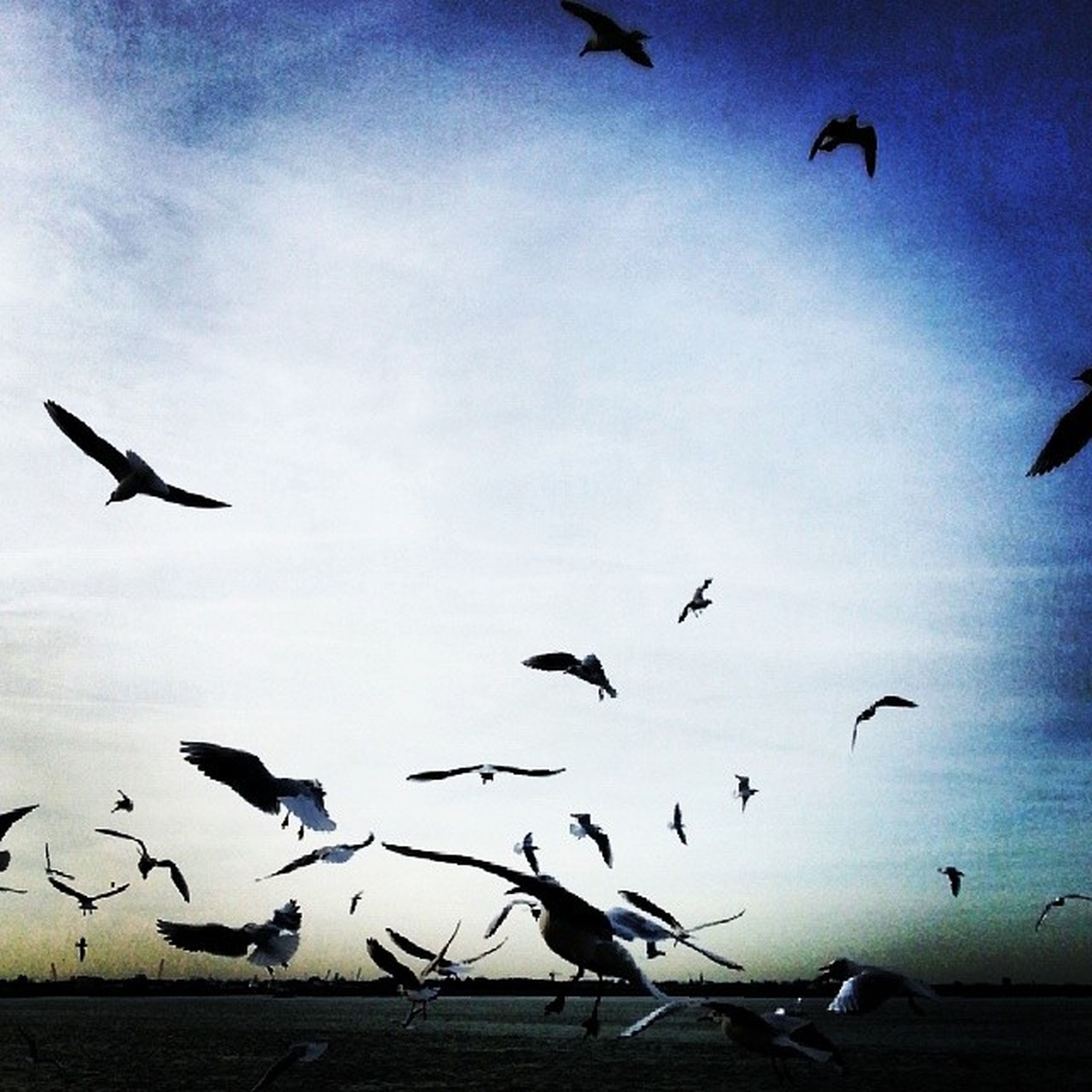 bird, flying, animal themes, animals in the wild, wildlife, flock of birds, mid-air, spread wings, sky, low angle view, seagull, medium group of animals, cloud - sky, nature, silhouette, motion, outdoors, beauty in nature, no people