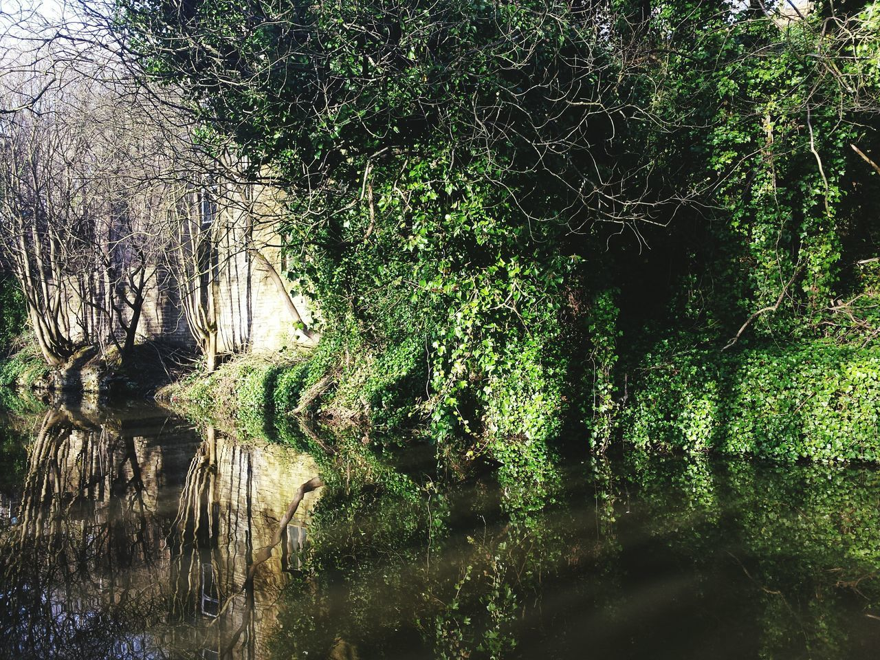 Tree Nature Growth Water No People Green Color Backgrounds Tranquility Outdoors Beauty In Nature Day Close-up Sky Reflection Reflections Canal Springtime Freshness Beauty In Nature Landscapes Landscape Yorkshire Green Leaves Nature
