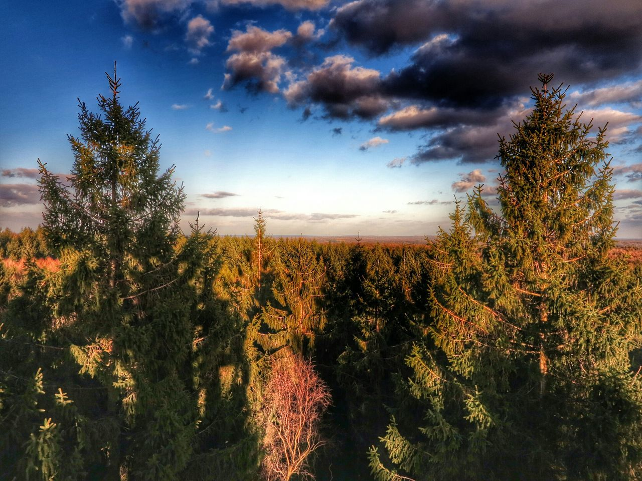 Stormarn Forrest Wald Schleswig-Holstein Natur Nature EyeEm Nature Lover HDR