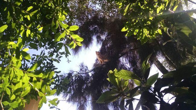 Sin Filtros Cats 🐱 Cat Lovers CATPLAY Naturaleza Nature Naturelovers Tijuana, Mexico Tijuana