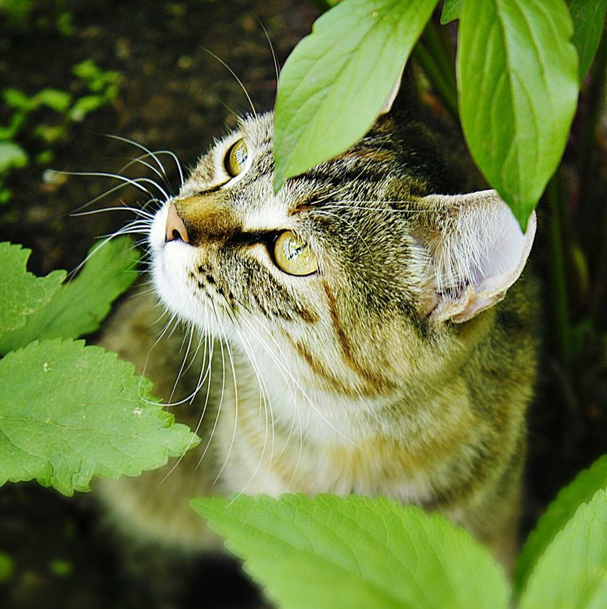 Cat Catsagram Cat Lovers Cat Nature Nature Cat Eyes Relaxing Followme Enjoying Life Awesome