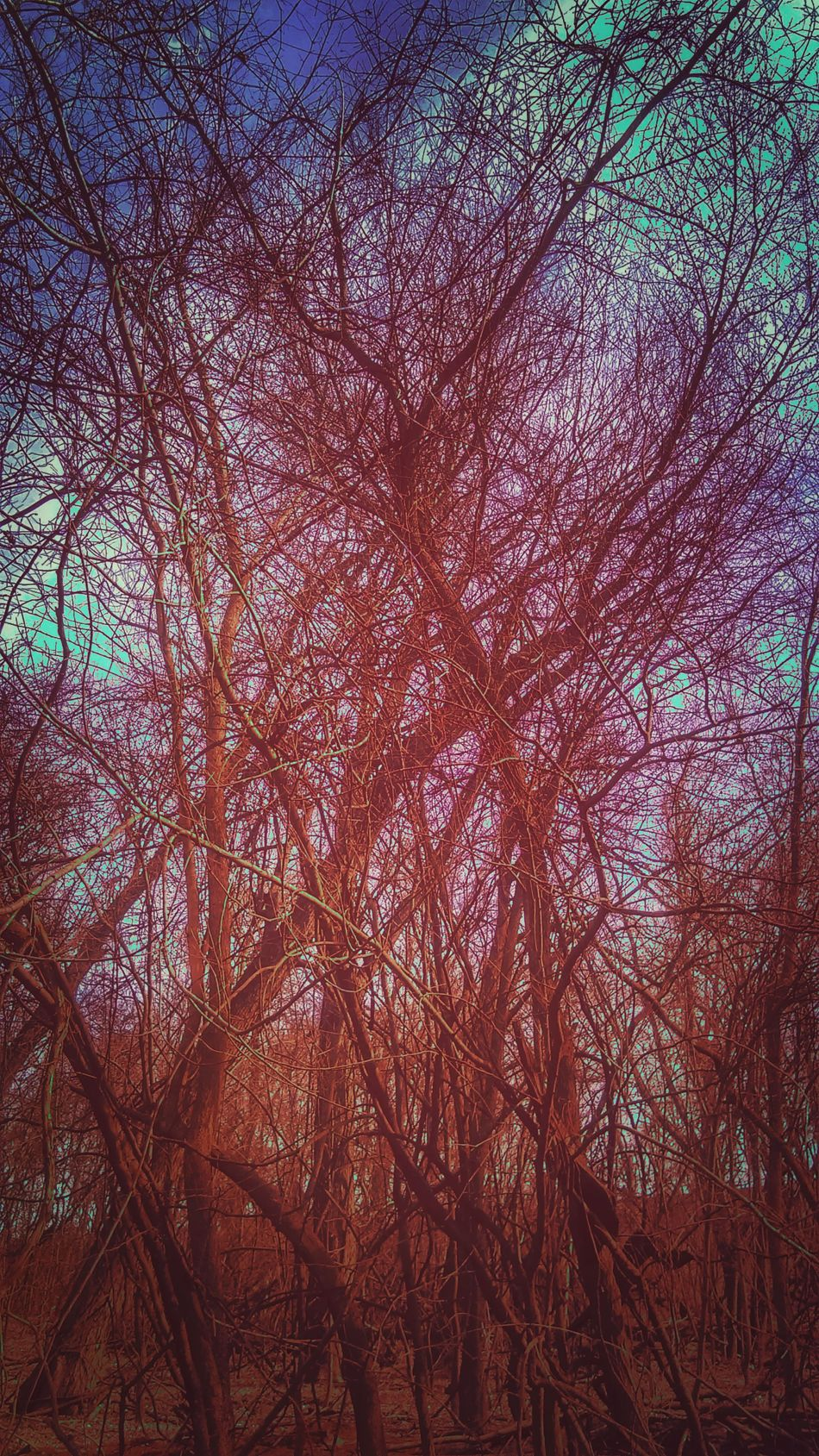 The Impurist Forest Of Lost Souls Night Divides The Day TreePorn Brush The Sky No People Only Nature Seeing Red Again