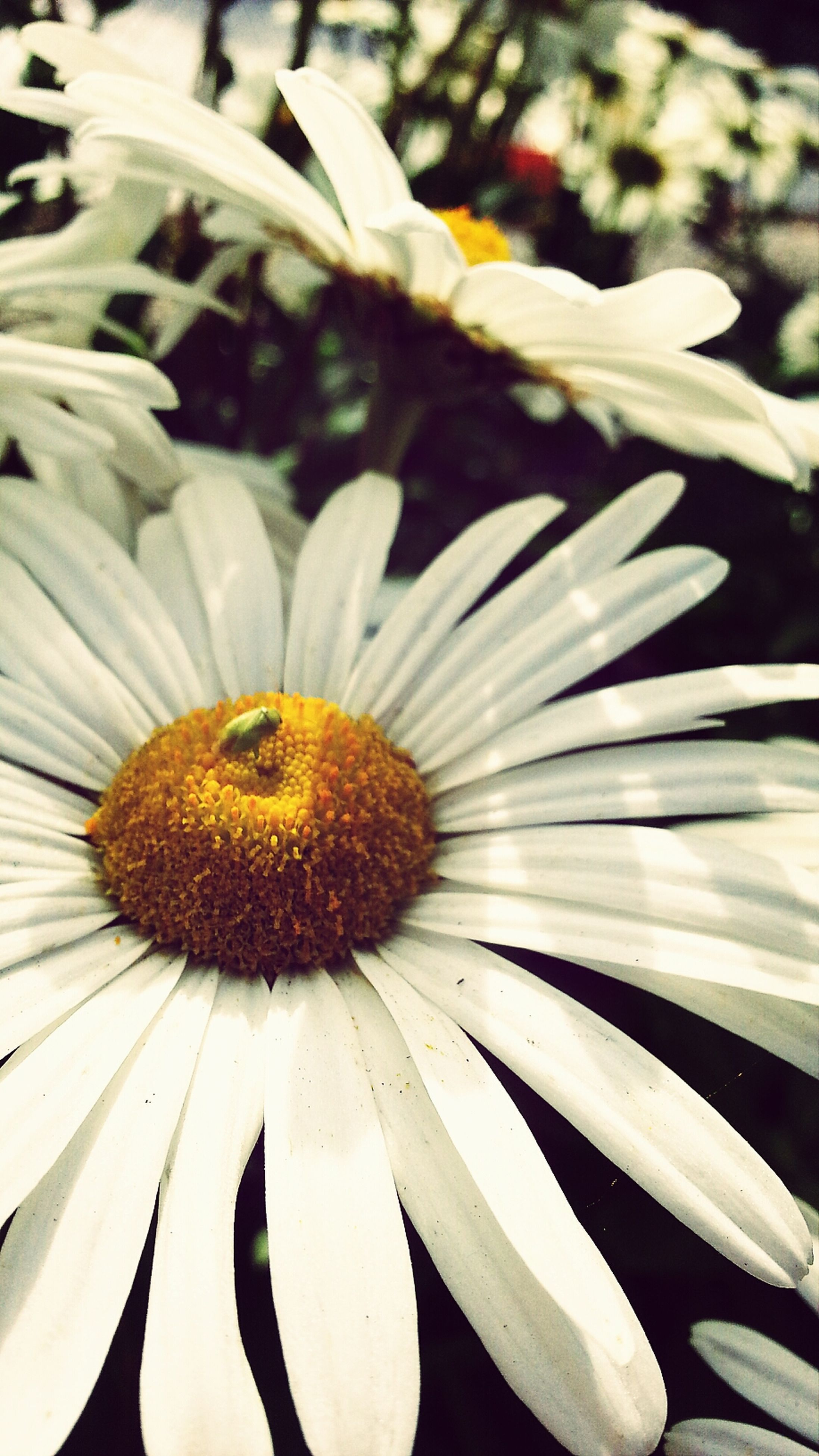 flower, petal, flower head, freshness, fragility, close-up, pollen, white color, beauty in nature, growth, nature, blooming, focus on foreground, stamen, plant, in bloom, single flower, no people, yellow, day