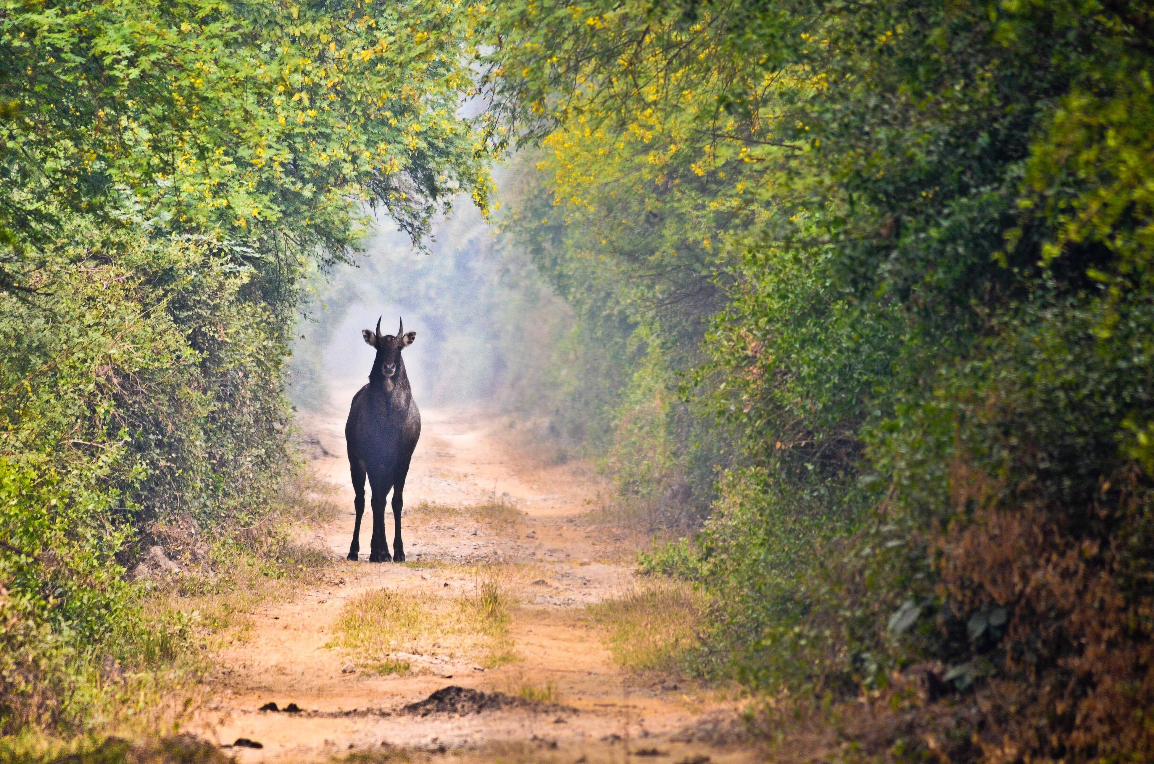 full length, walking, rear view, tree, lifestyles, men, the way forward, one animal, nature, standing, leisure activity, animal themes, growth, forest, tranquility, dirt road, day, outdoors