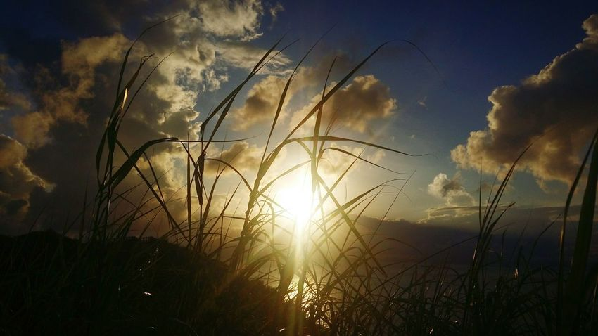Sunset Nature Sun Sky Cloud - Sky Plant Growth Sunlight Summer Beauty In Nature Cereal Plant Grass Close-up Feeling Good Wind- 虎山 虎山觀景台 Tai O 大澳 HongKong