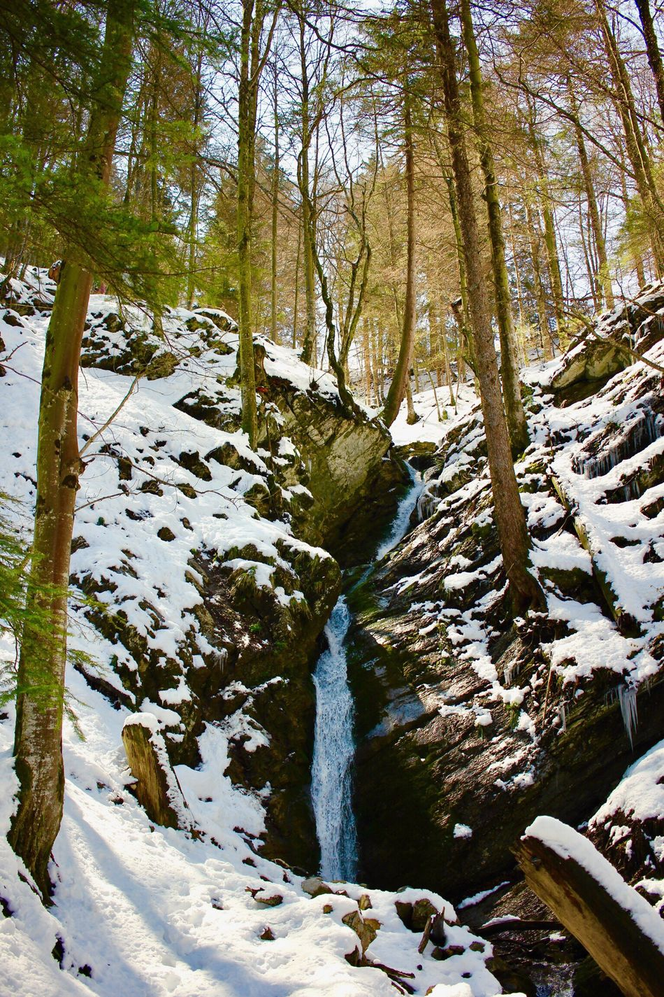 Nature Flowing Water Waterfall Beauty In Nature Forest Tree Water Scenics Tranquility No People Landscape Outdoors River Travel Destinations Cold Temperature Tree Trunk Snow Switzerland Switzerland Alps Appenzell EyeEmNewHere