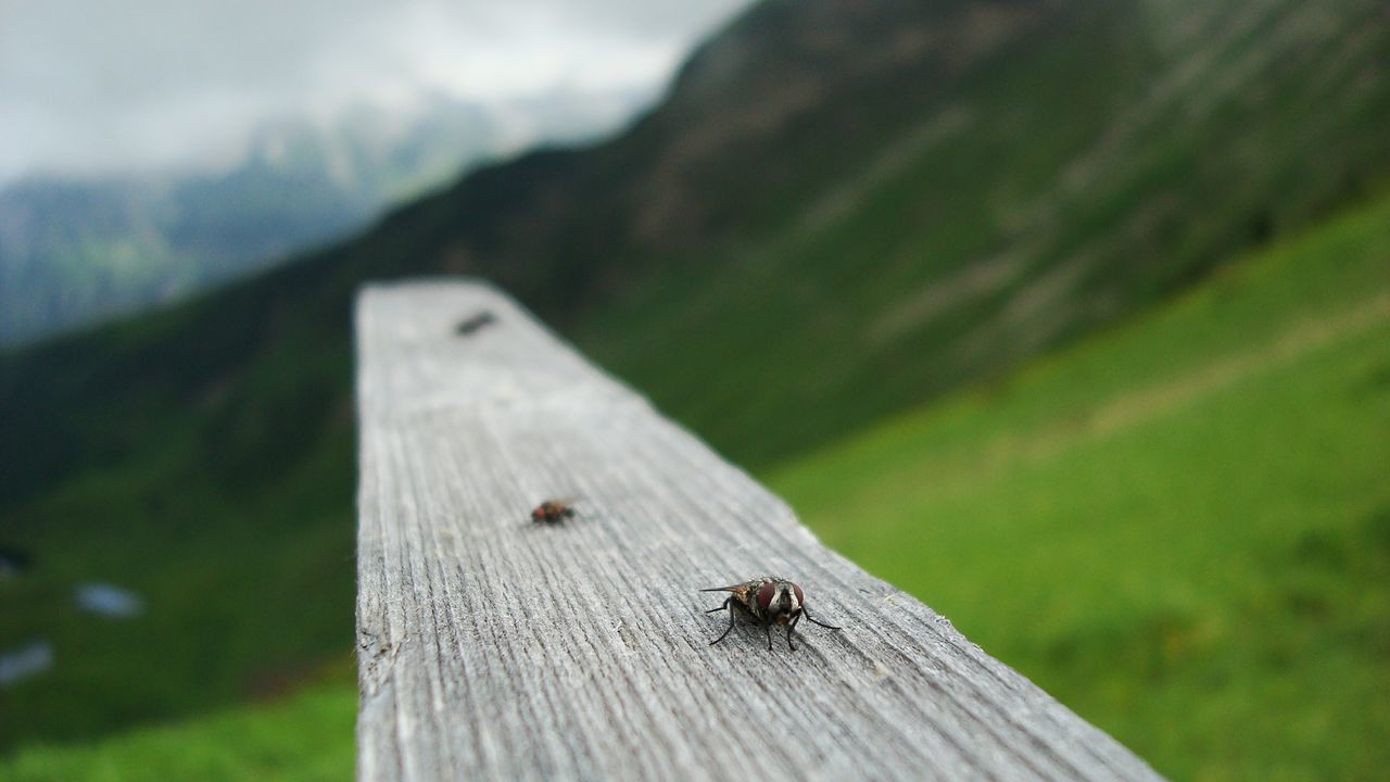 insect, animals in the wild, one animal, animal themes, animal wildlife, day, focus on foreground, wood - material, outdoors, no people, nature, close-up, tiny, mountain
