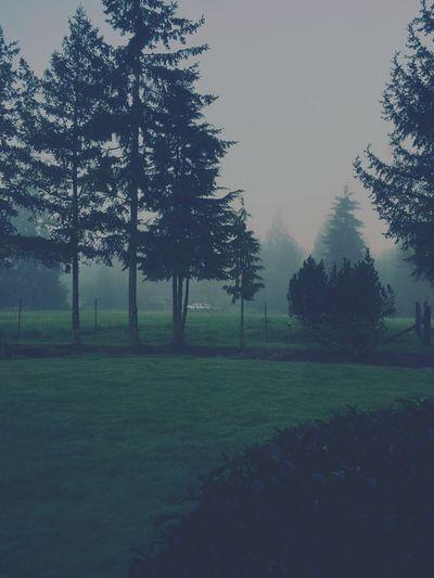 Fog In The Trees Morning Mist