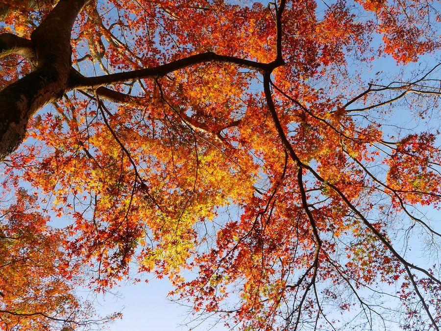 高取城跡 奈良県 EyeEm Best Shots EyeEm Nature Lover OpenEdit Tommy@collection Colors Of Autumn 紅葉 Autumn Colors Autumn Collection Autumn Leaves Autumn Japan