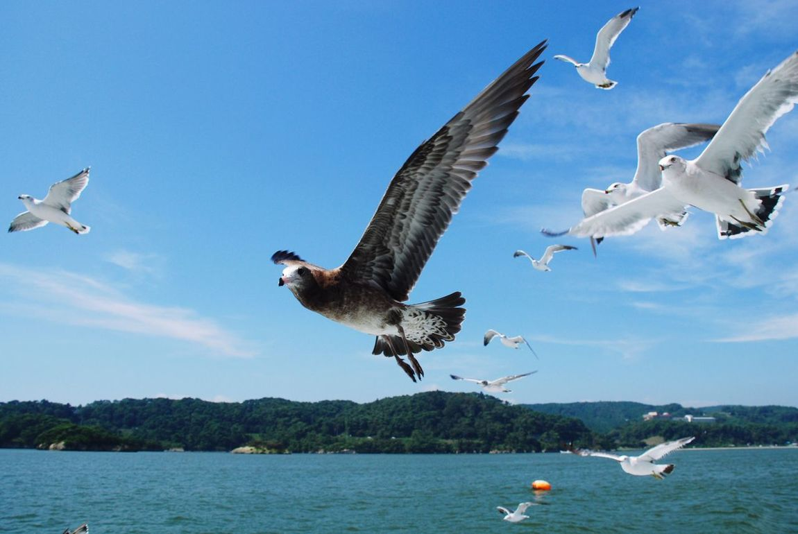Animals In The Wild Bird Flying Animal Themes Spread Wings Animal Wildlife Water No People Low Angle View Outdoors Sky Gull Animals