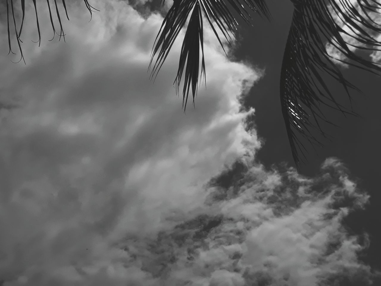 cloud - sky, low angle view, sky, nature, outdoors, no people, palm tree, beauty in nature, day, tree