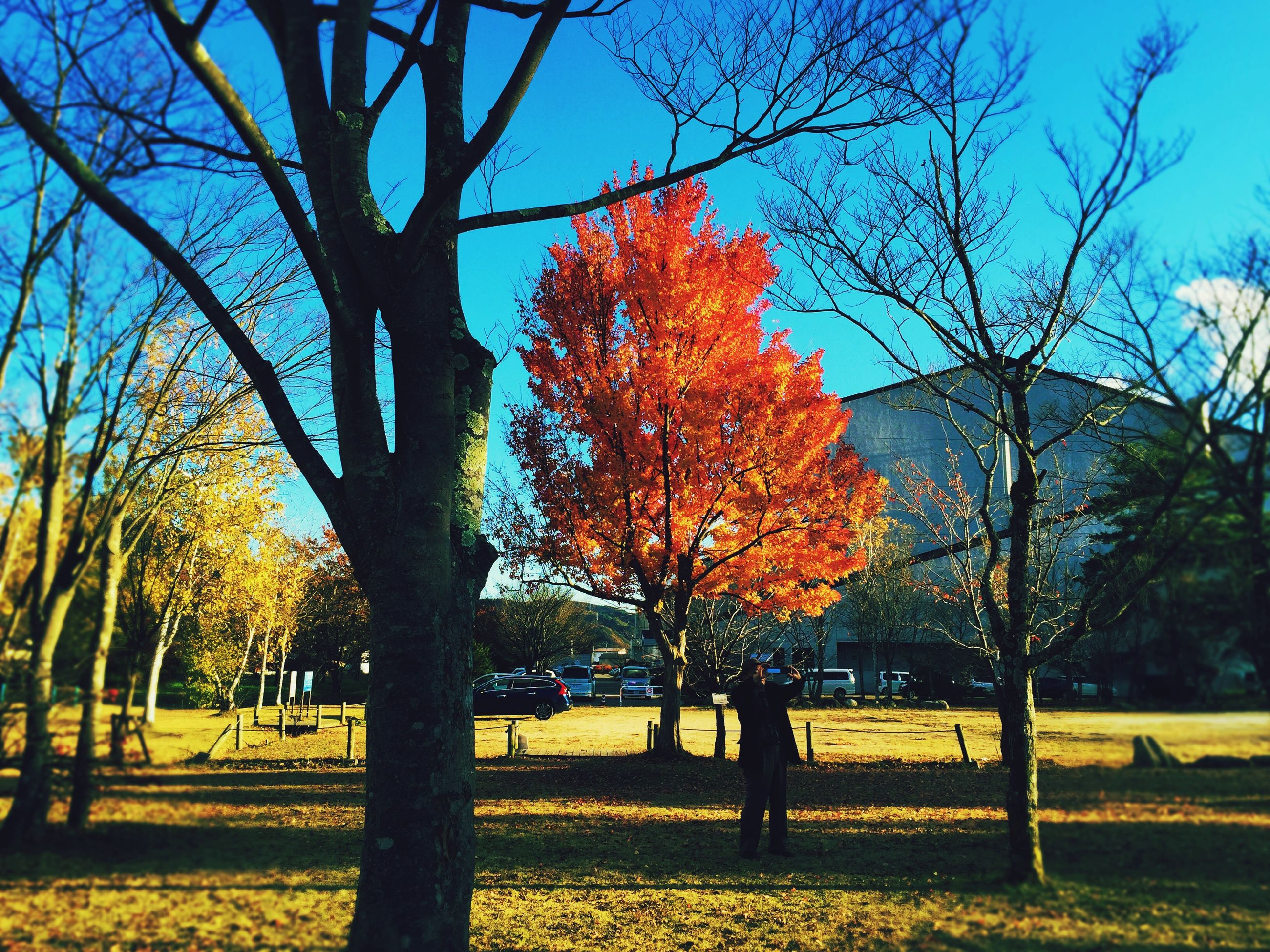 tree, autumn, branch, bare tree, change, park - man made space, orange color, sky, tranquility, nature, tree trunk, season, beauty in nature, sunlight, yellow, shadow, fence, growth, scenics, field