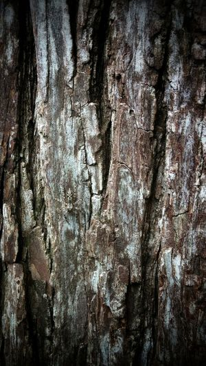 Spider - Wood A Walk In The Woods Trees Bark Spider Adaptations Brown Camouflage Textures And Surfaces Getting Inspired