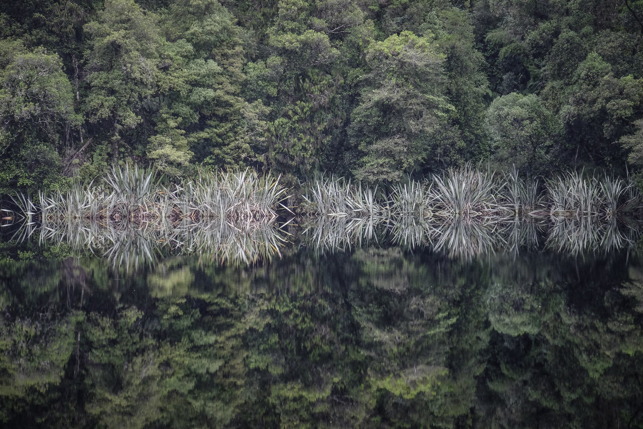 Beauty In Nature Change Your Perspective Coniferous Tree Different Perspective Dimensions EyeEm Masterclass EyeEm Nature Lover FUJIFILM X-T1 Growth Illusion Lake Matheson Mirror Mirror Lake Nature New Zealand New Zealand Beauty New Zealand Impressions New Zealand Landscape New Zealand Scenery Outdoors Reflection Reflections Reflections In The Water Tree Upside Down