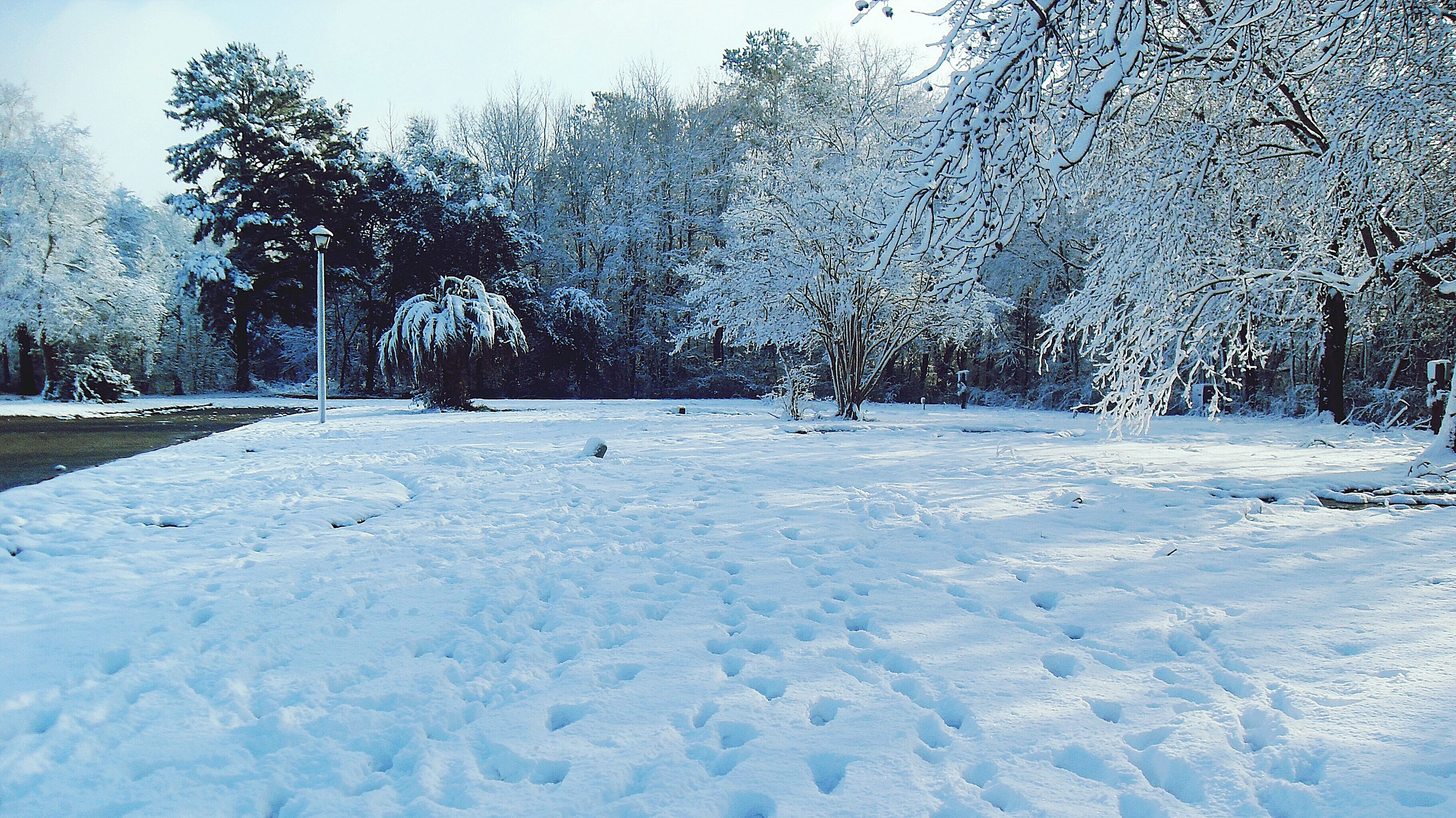 snow, winter, cold temperature, season, weather, tree, covering, frozen, white color, nature, tranquility, tranquil scene, field, beauty in nature, landscape, covered, bare tree, snow covered, white, scenics