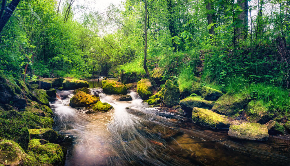 Beauty In Nature Day Flowing Water Forest Green Color Long Exposure Nature No People Outdoors Redwitz River Rodach Tree Water
