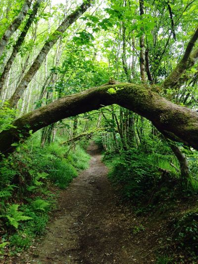 Into the woods and far away Woods Trees Forest Forestwalk Nature Naturetrail Walking Green Greenery Magical Trees Beauty In Nature Wales