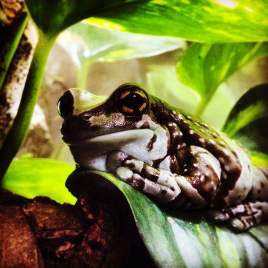Frog. Frog Hornimanmuseum