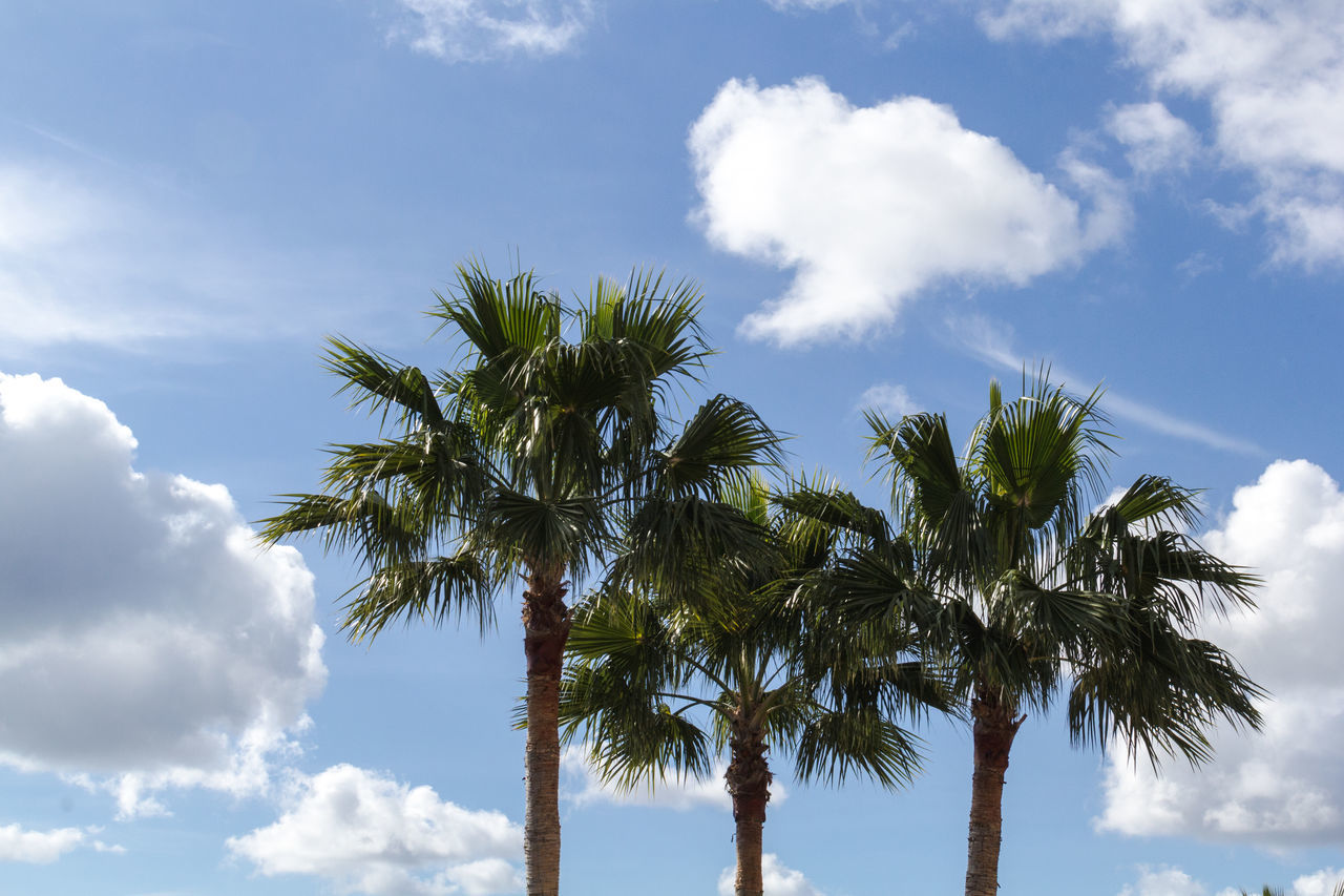 palms Beauty In Nature Cloud - Sky Day Growth Low Angle View Nature No People Outdoors Palm Tree Palmtrees Sky Summer Travel Destinations Tree Tree Trunk Treetop Wanderlust Miles Away