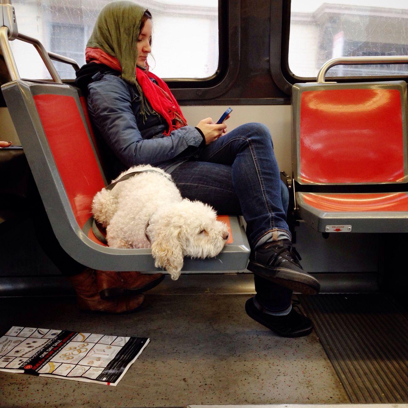 Dog On Muni Taking Photos Random People IPhoneography