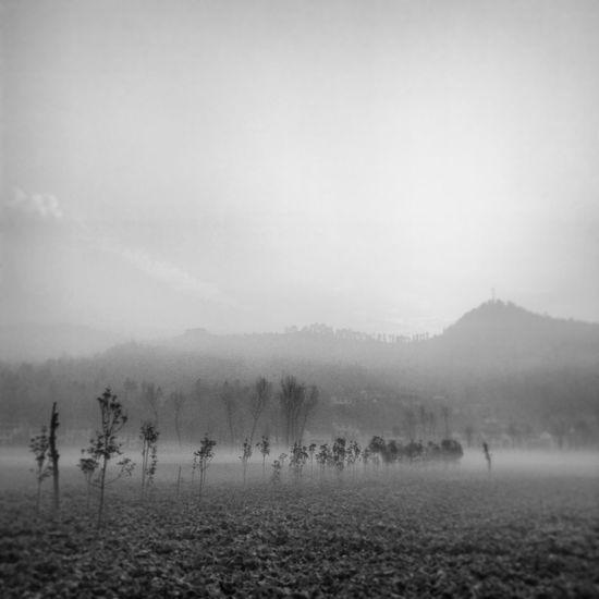 家乡 Nature Fog Landscape Tranquility Tranquil Scene Beauty In Nature Scenics