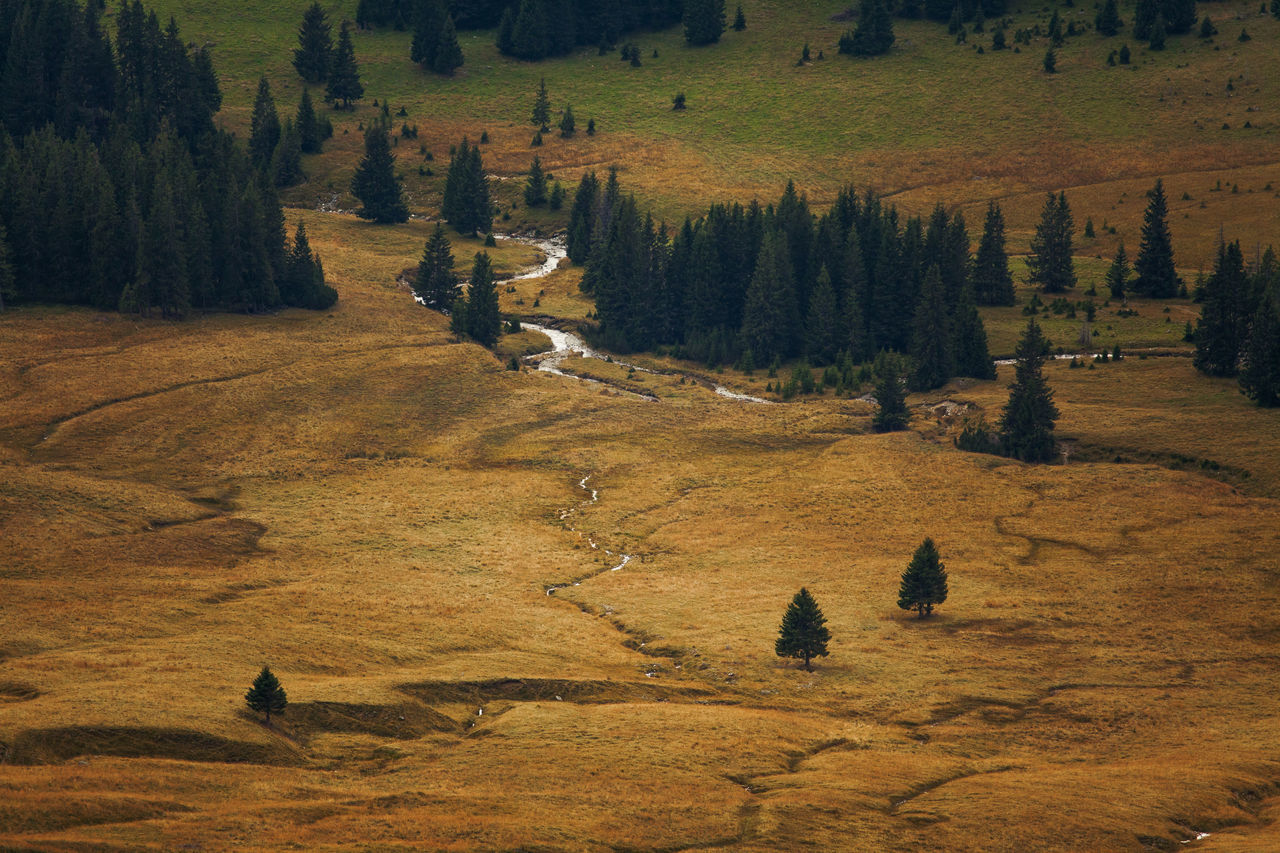 Mountain landscape from Bucovina, Romania. Nature Pine Tree Trees Forest Landscape Mountain River Stream Valley View From Top