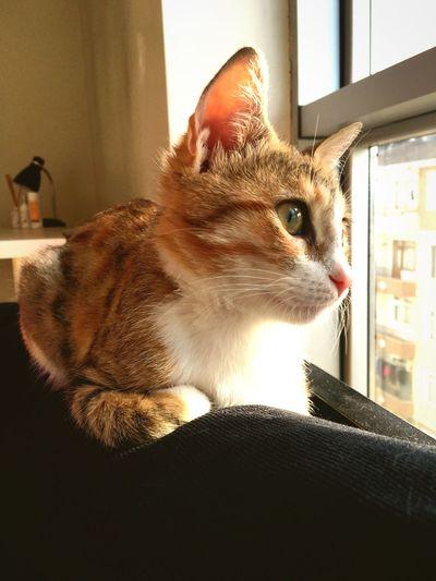 Cat Latte Cute Pets
