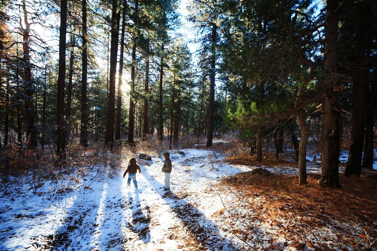 Siblings Playing In Forest During Winter On Sunny Day
