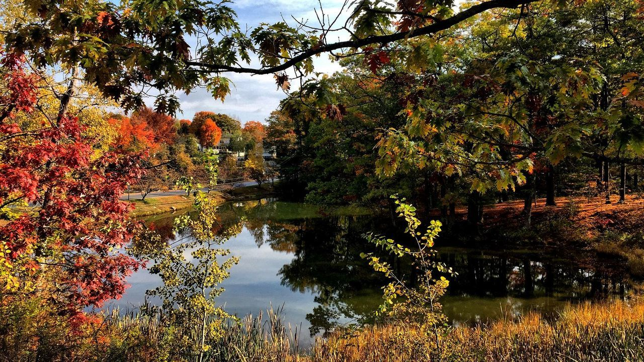 Fall Colors Pond Beautiful Fall Day Taking Photos Carol Sharkey Photography Maine