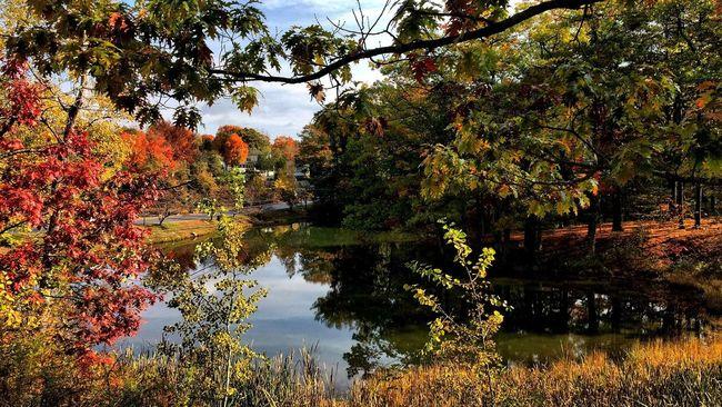 Fall Colors Pond Beautiful Fall Day Taking Photos Carol Sharkey Photography Maine