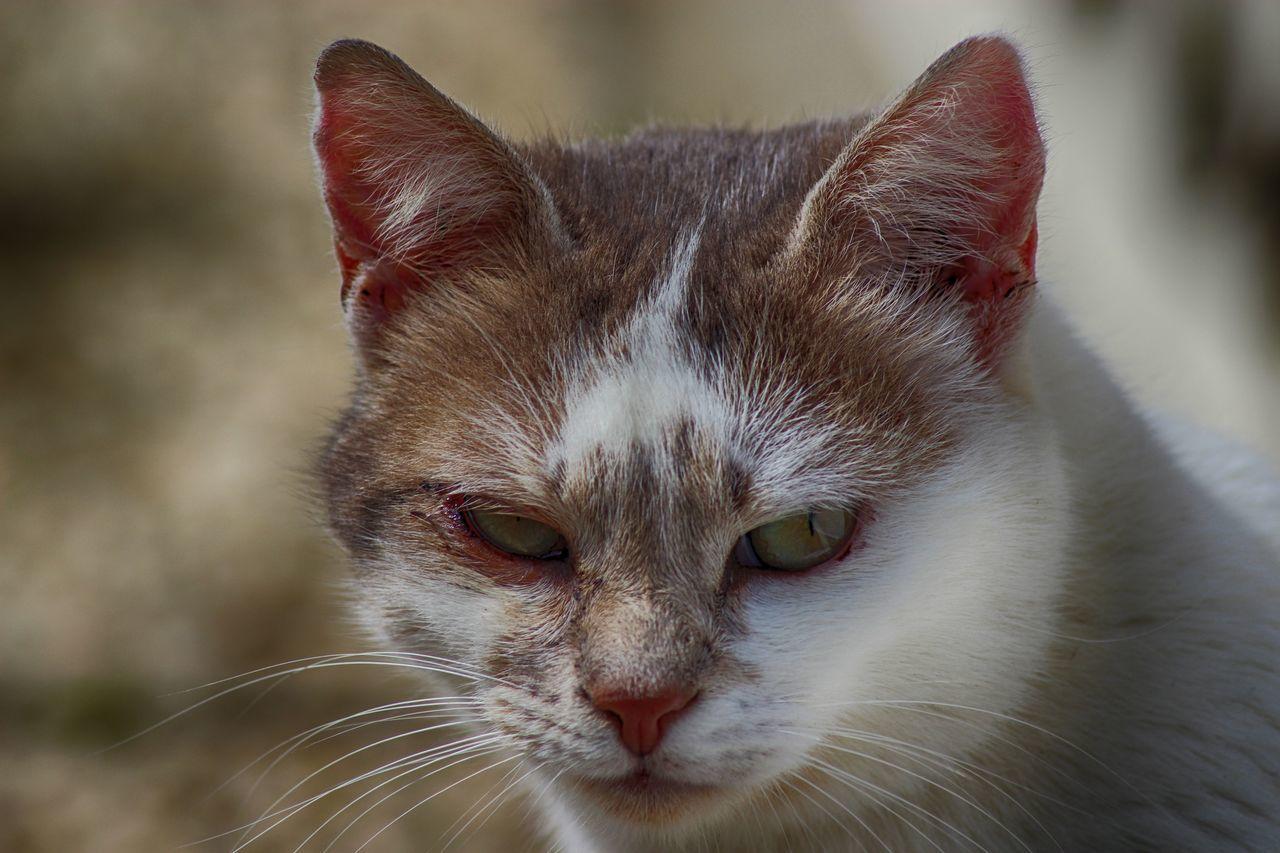 Beautiful stock photos of katzen, Alertness, Animal Themes, Close-Up, Day