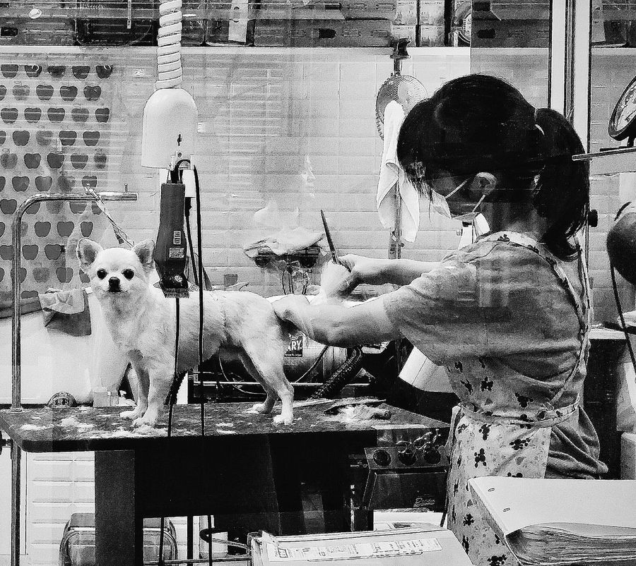 Grooming Dog Animal Pet Small Dog Shop Chiyoda Tokyo Japan Travelphotography Streetphotography Bnw Bnw_collection Bnwphotography Bnw_captures Bnw_tokyo Bnw_japan