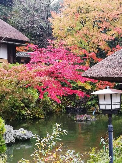The winter you're not gonna see Built Structure Building Exterior Outdoors Architecture Water Nature Day Beauty In Nature Tree No People Growth Scenics Momiji
