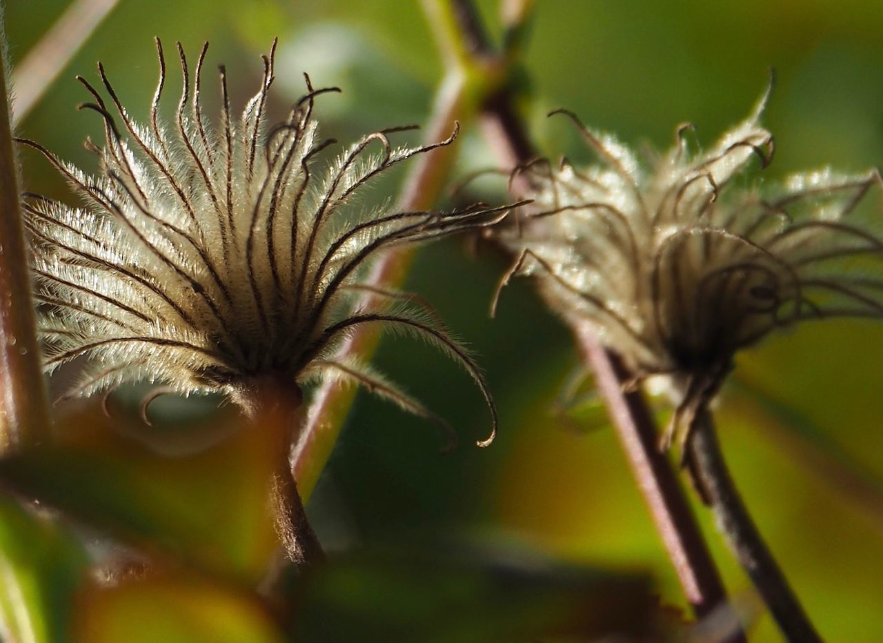 nature, no people, plant, growth, day, outdoors, close-up, flower, flower head
