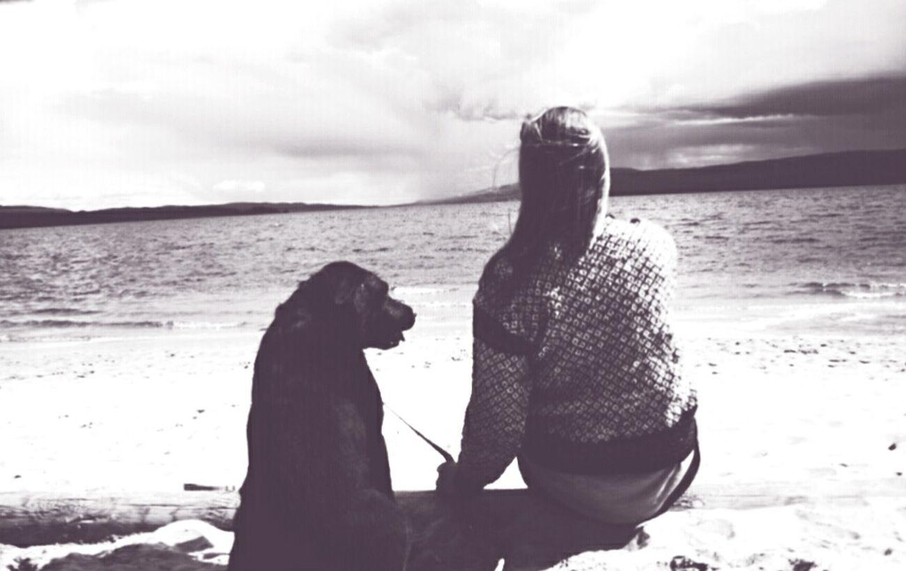 Littlesister Labrador Dog Naturephotography Lake View